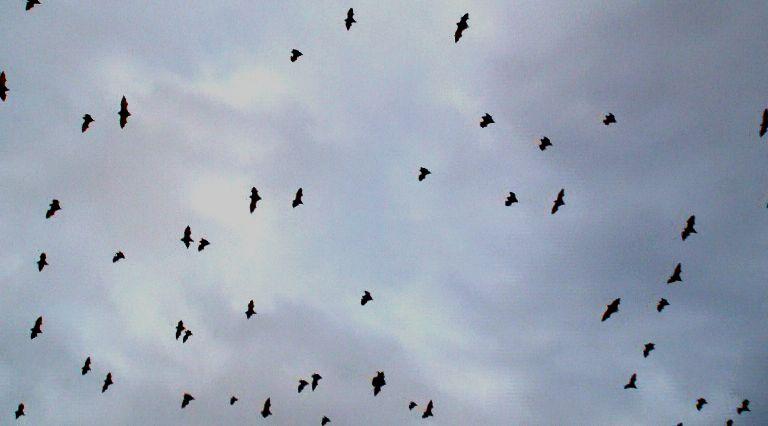 moskito flugzeug funktioniert nicht